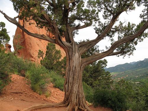 GOG tree